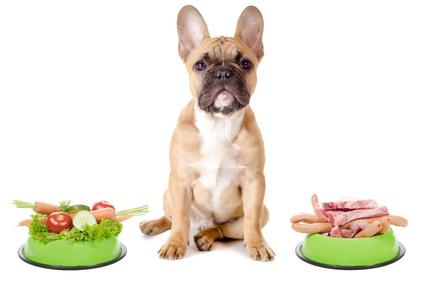 Schafgarbe für Hunde